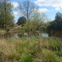 Lakes at Brockwell Park