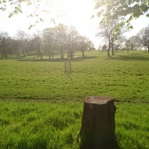 Lots of trees have been felled in Brockwell Park